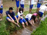 田植えのあと、用水路で足を洗う学生たち。