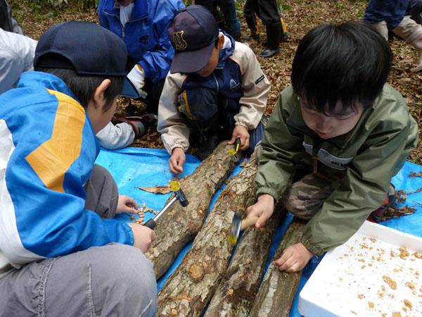 シイタケの埴菌体験
