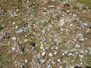 田んぼに落ちた石