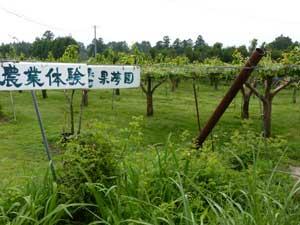 「ファーム・イン果夢園」の体験農園