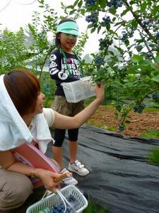 ブルーベリーの収穫(エコニコ農園)
