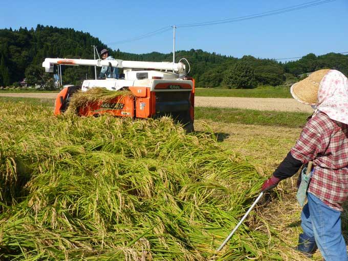 農家民宿「重松の家」秋の仕事
