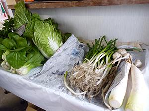 11月19日 野菜